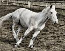 Playful pony by Nick-T