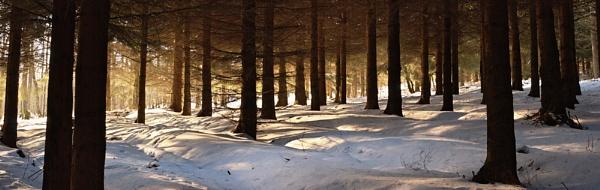 Longnor Wood by cooperr