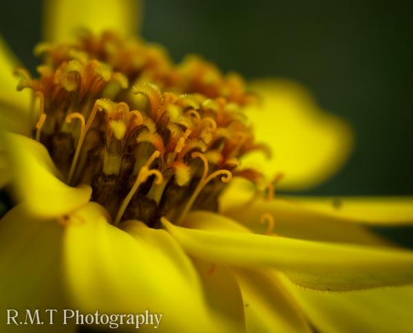 Flower by RustyBoy