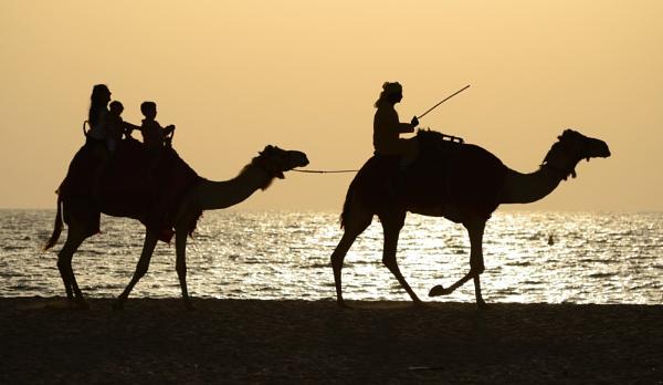 Dubai beach camel train by NippyN