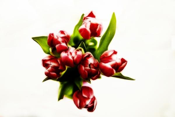 Tulips by Sean_Dillon