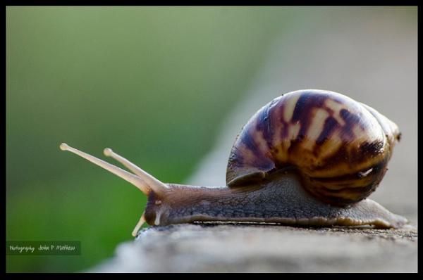 Snail by johnMathew
