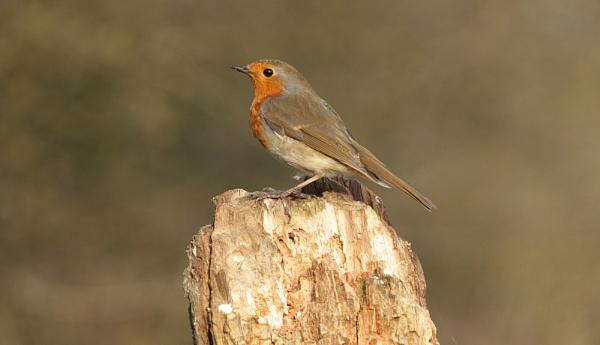 Robin by andymark