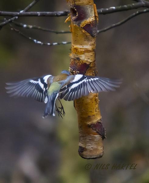 Not a hummingbird by NH_Snap