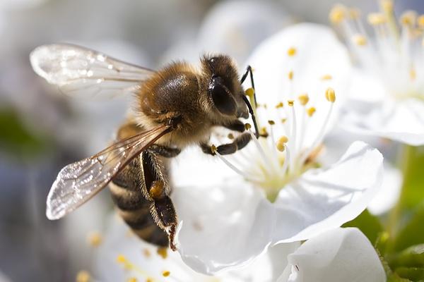 Busy Bee by llareggub