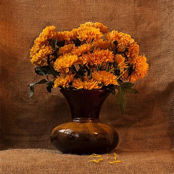 Gold  Chrysanthemums by Irishkate
