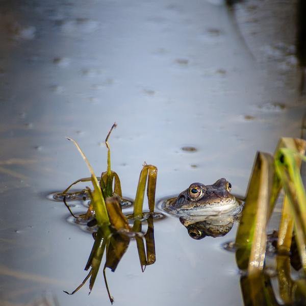 Frog! by blomman