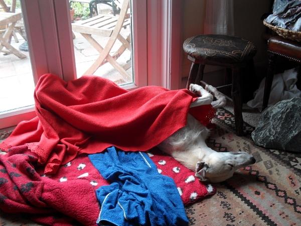 A dogs life..... by Chinga