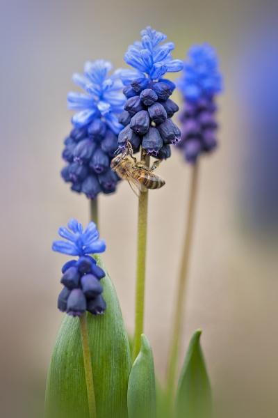 Spring Bee by jackyp