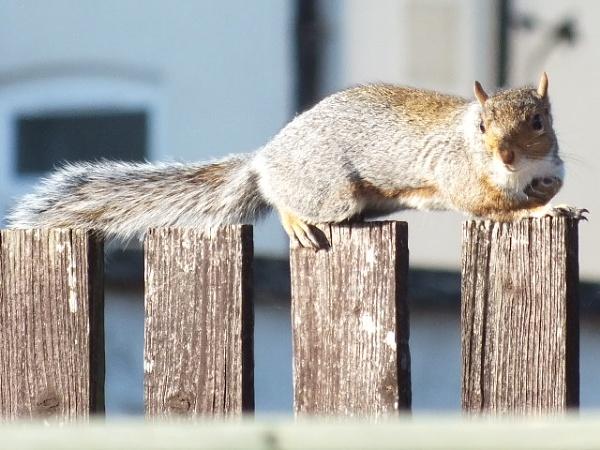 Squirrel by Derek_Fearn