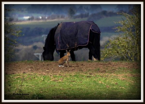 horse hare by sirhcelah100