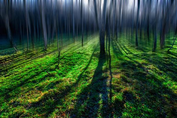Morning Shadow by platzy