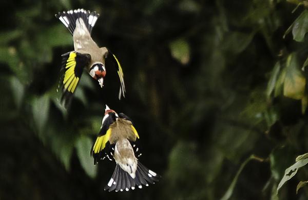 Flight  Fight by Fogey