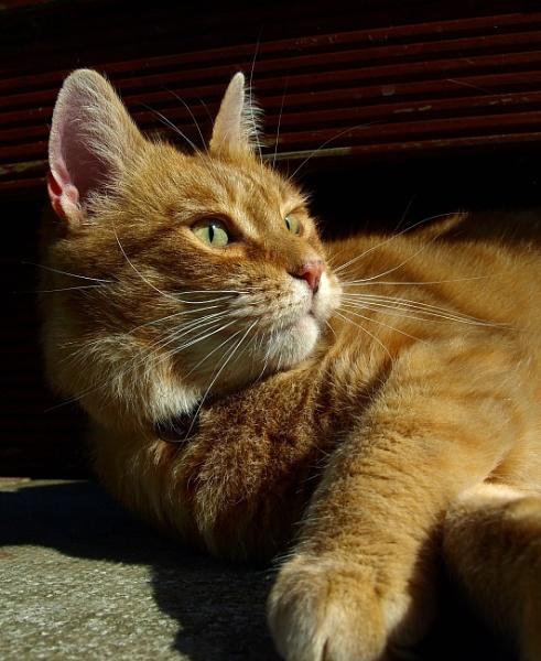 Sunbathing by turniptowers