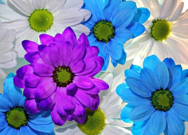 Bright Bloom by FlawedDesign
