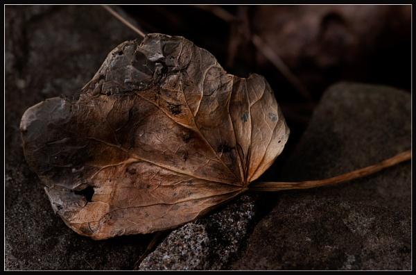 Leaf All Details by Morpyre
