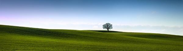 Field and Tree, Bean, Kent by derekhansen