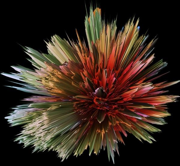 Flower Burst by Ozzie55