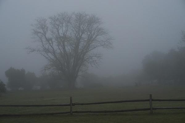 Morning Mist by DennisT