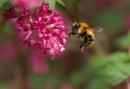 Bee by Steveh550
