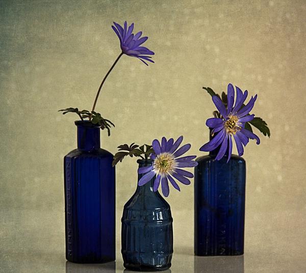 Three Bottles with Anemones by Irishkate