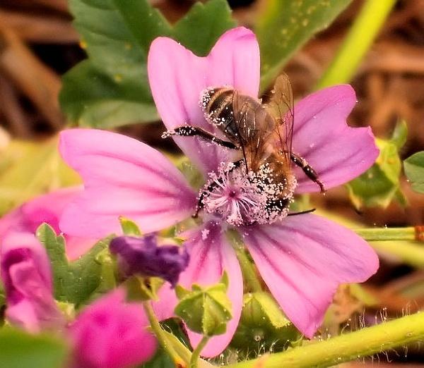 Bee on lunch break