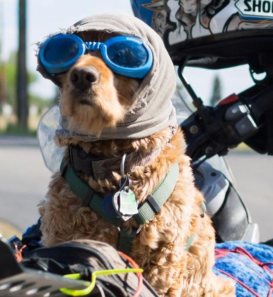 biker by wm