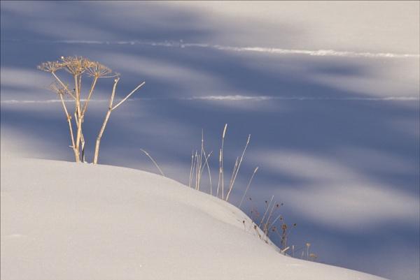 Twigs in warm light in the snow by maggietear