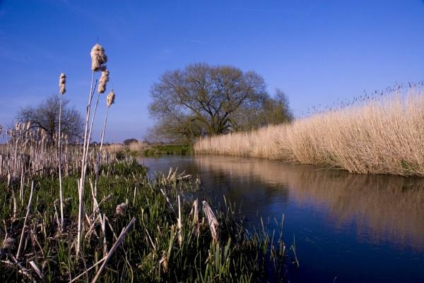 River Wey, Woking by Earthwatcher