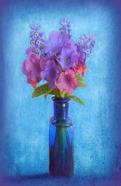 Pulmonaria Blue by BarbaraR