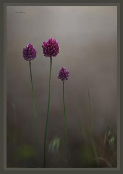 Wild Flower by museebfoto