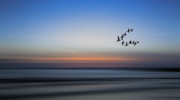 The Flight Home by karen61