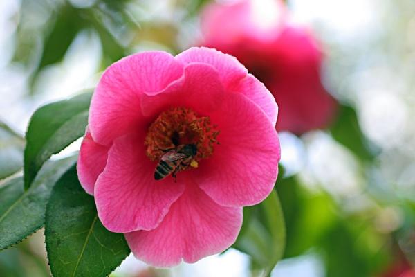 Spring visitor by susanbarton