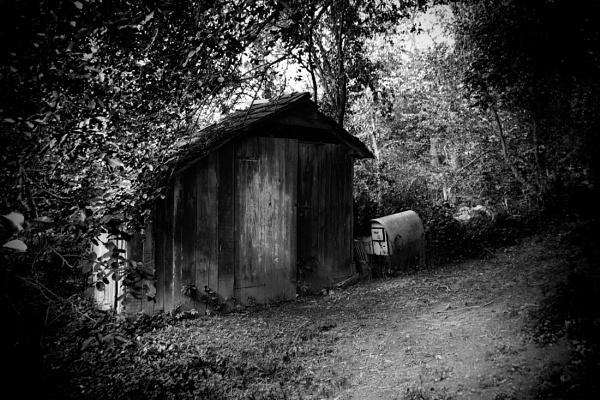 under the trees 2 by IgorKo