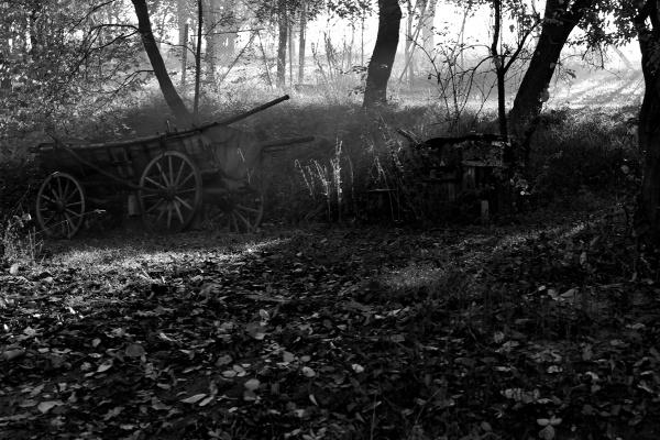 under the trees 3 by IgorKo