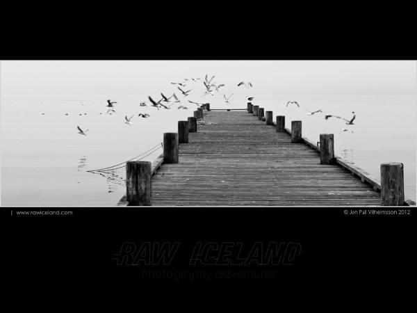 Defiant seagull by Jon Pall Vilhelmsson