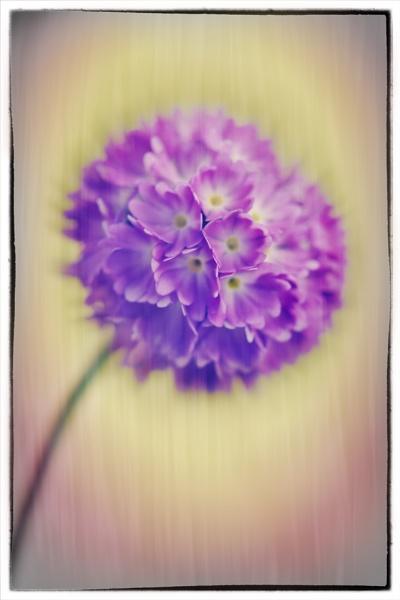 Purple Haze by BydoR9