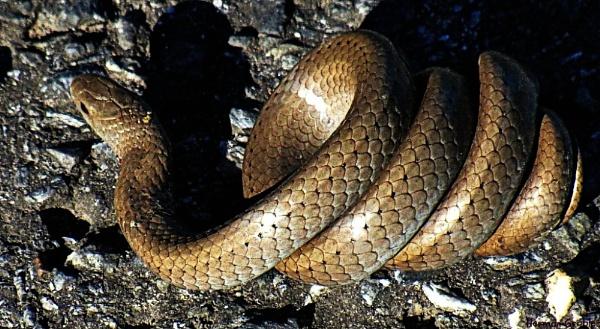 Naughty Snake !! by Hermanus