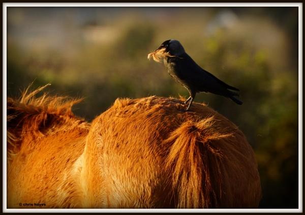 the barber bird by sirhcelah100