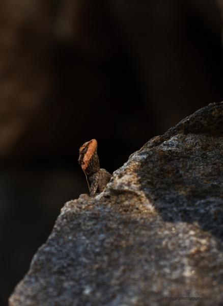 Camouflage by kumarav23