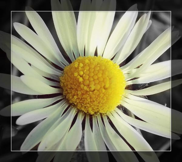 Daisy dayy. by megan99