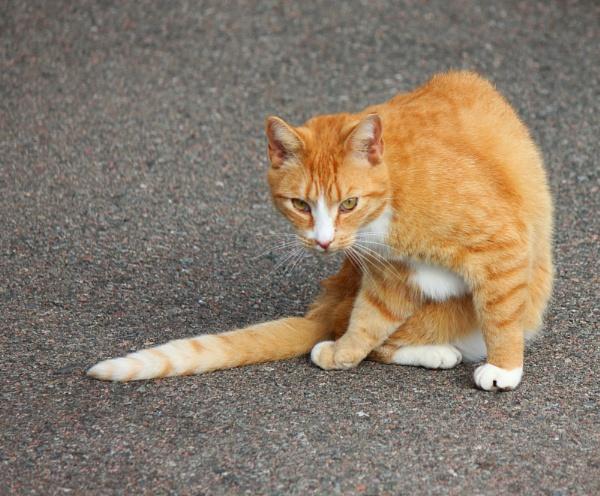 Orange Mouser by FrancisMacDonaldPhotography