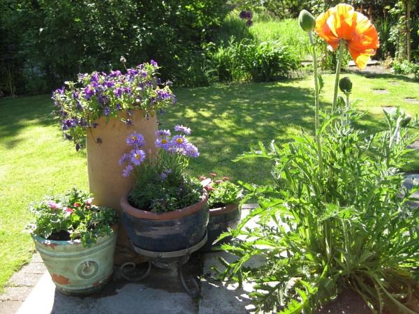 Garden by freckleface1