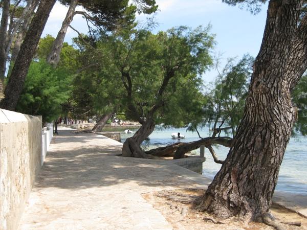 Pine Walk by freckleface1