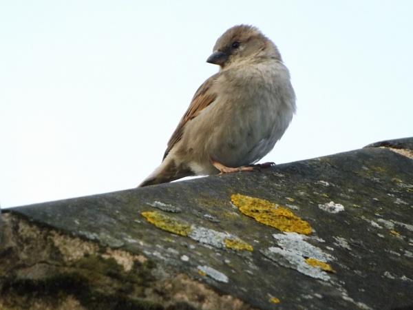 First bird photography attempt ( around 6:30 AM ) by twittwoo