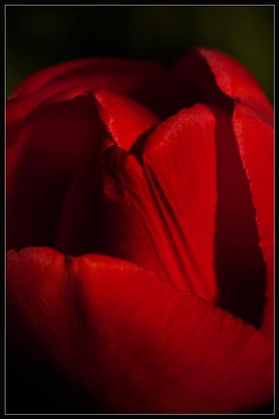 Carmen by Morpyre