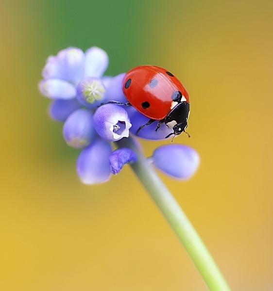 Ladybird by clintnewsham