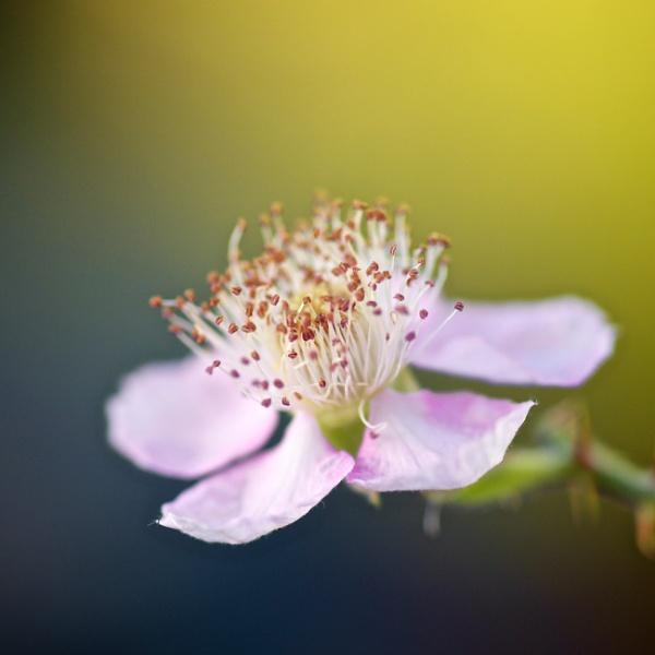 macro flower by danbaker1988