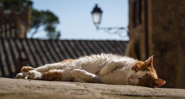 Dozy Cat by Snaphappyannie