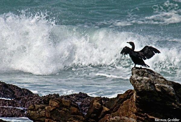 Rugged Coastline by Hermanus